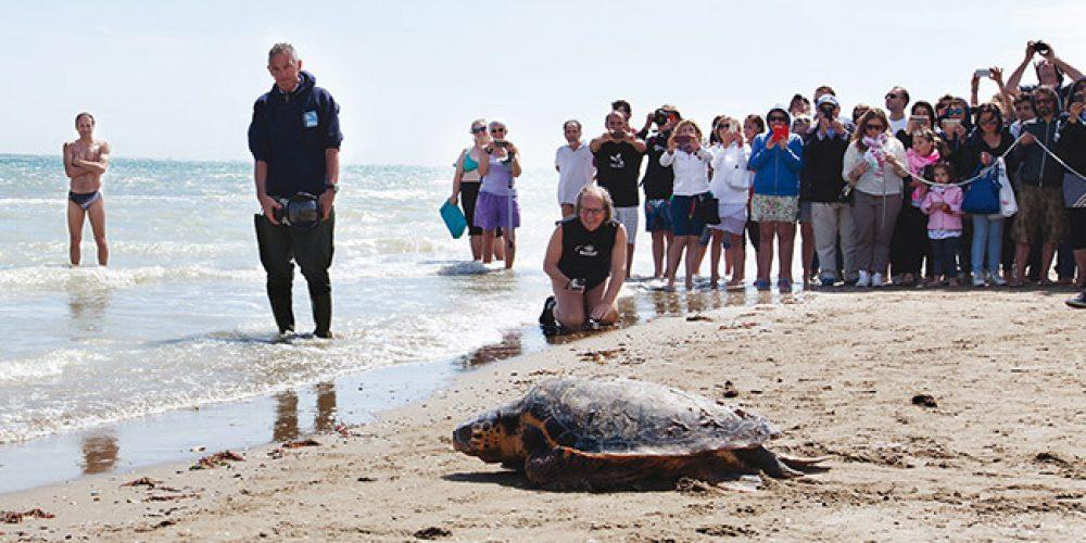 Tartarughe marine, delfini e squali: l'Adriatico delle meraviglie