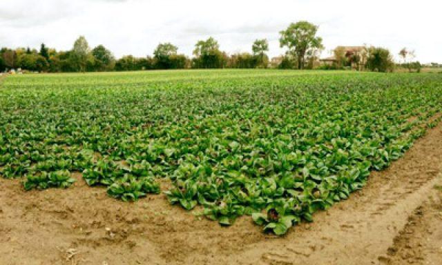 Azienda Agricola Bio Bianchi