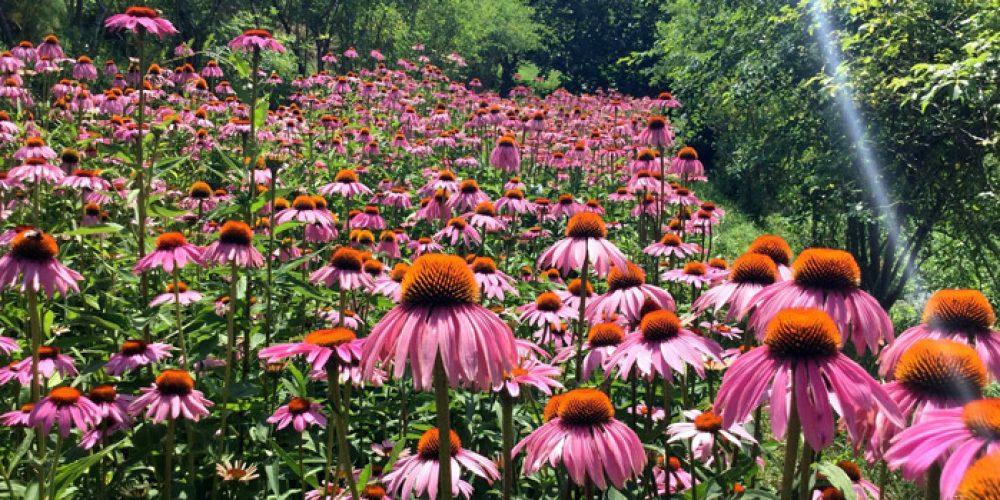 Erbe, fiori e piante… Tutto per Amore!