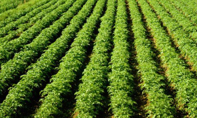 La Coccinella Azienda Agricola