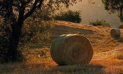 Società Agricola Il Pagliaio