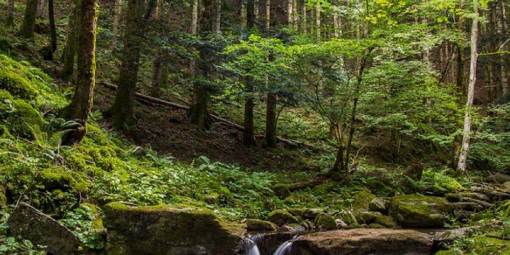 Un esempio romagnolo di vita all'aria aperta: ilparco delle Foreste Casentinesi