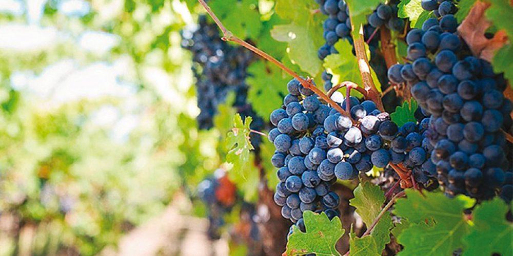 La Romagna del buon vino (BIO)