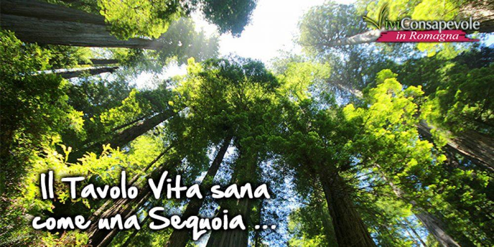 Resoconto Tavolo Vita Sana e organizzazione nuovi eventi