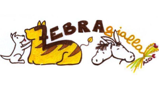 Zebra Gialla