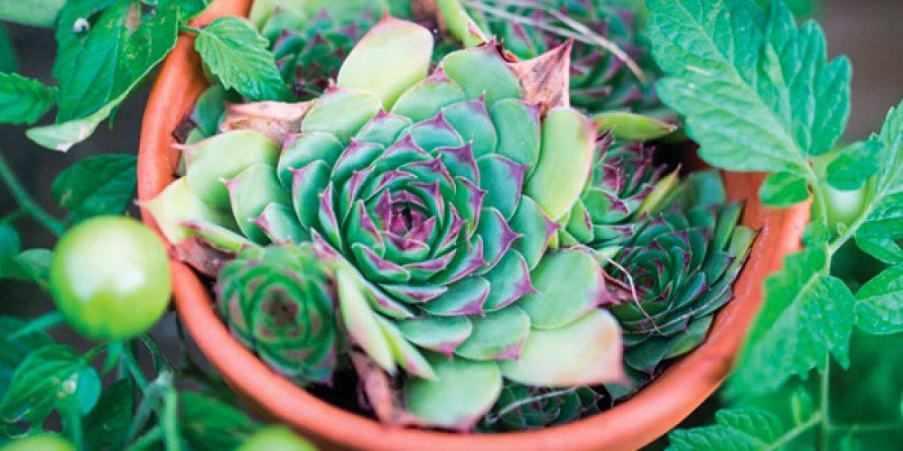 Proteggi le piante dell'orto e del giardino con gli oli essenziali