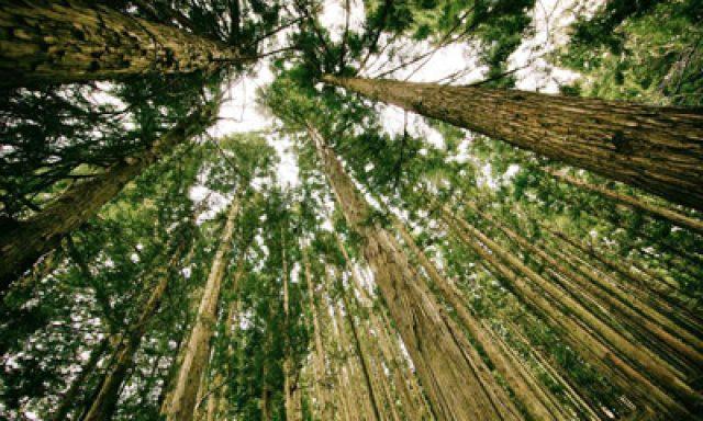 Ecohouse Edilizia Sostenibile