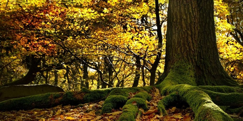 Un mondo a misura d'albero