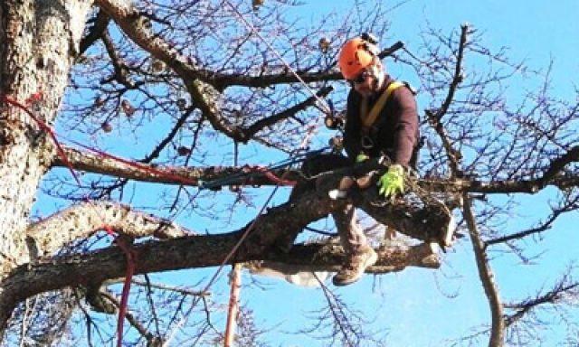 Tree Climbing FC